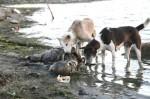 india-photos-26-560x373
